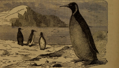 10 Years of Using Linux: How It Was Before, And How it Became 3